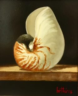 Nautilus by Bert Beirne