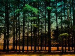 Carolina Pines and Golden Soybeans by Watson  Brown
