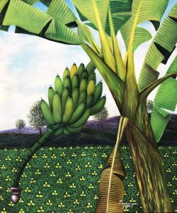 Bananier by Jean Laguerre