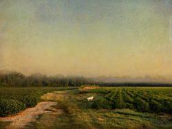 Looking Homeward, Angel by Watson  Brown