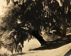 Magnolia Gardens by Bayard Wootten