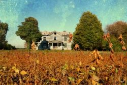Northampton Plantation House and Soybeans by Watson  Brown