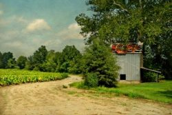Old Barn and Ripe Fields by Watson  Brown