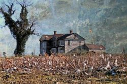 Old Mansion and Cut Cotton Stalks by Watson  Brown