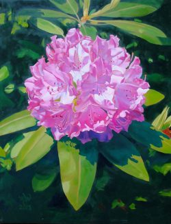Rhododendron by William C. Wright
