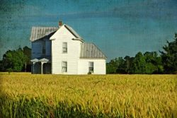 Spring Wheat and Old Farm House by Watson  Brown