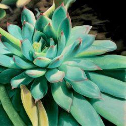 Sunlit Succulent by Jaimon Caceres
