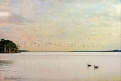 Sunrise on the Pamlico with Two Geese by Watson  Brown