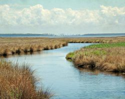 Tropical Clouds and Salt Marshes by Watson  Brown