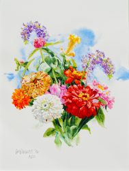 Variegated Zinnias by William C. Wright