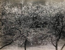 Apple Trees by Bayard Wootten (1875-1959)