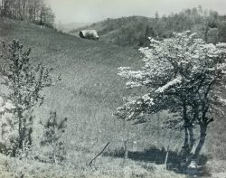 Spring Dogwood in the Mountains by Bayard Wootten