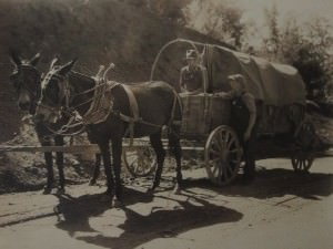 Mule Drawn Covered Wagon by Bayard Wootten