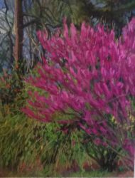Redbud on Roslyn Road III by Elsie Dinsmore Popkin
